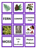 Classification Memory Game