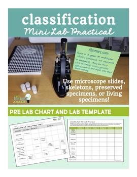 Classification- Mini Lab Practical