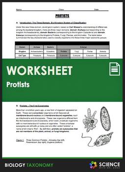Taxonomy - Protists