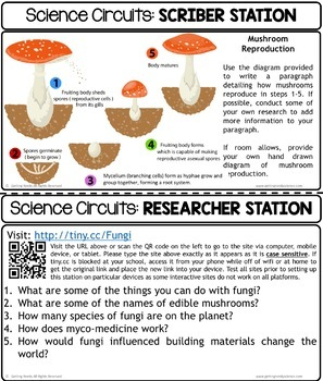 Fungi Classification - Science Centers / Lab Stations