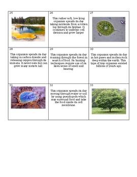 Classification Sort Activity