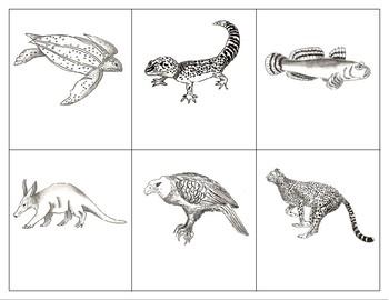 Classification: Vertebrates and Invertebrates