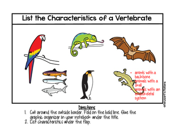Classification: What is a Vertebrate?