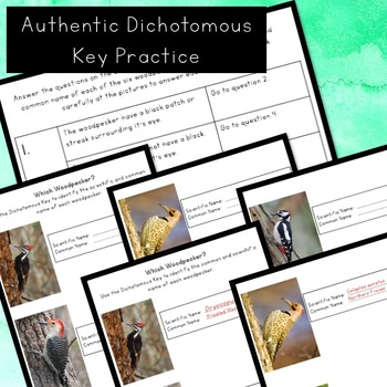 Classification and Dichotomous Key - Guided Notes, Examples, and Practice