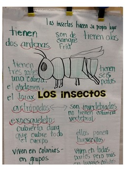 Classification of Animals in Spanish