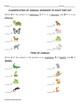 classification of animals by kuting 39 s worksheets tpt. Black Bedroom Furniture Sets. Home Design Ideas