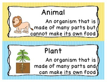 Classification of Animals and Plants Word Wall