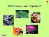 Classification of Animals with Vertebrates Interactive Powerpoint