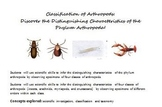 Classification of Arthropods: Discover the Characteristics