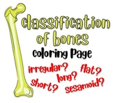 Classification of Bones Coloring Page