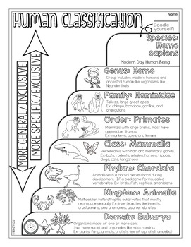 Classification of Life Biology Doodle Diagram