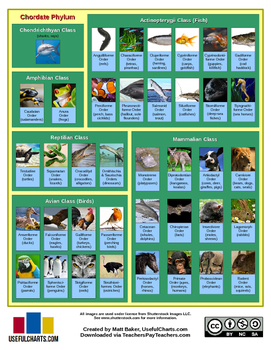 Classification of Living Things Chart