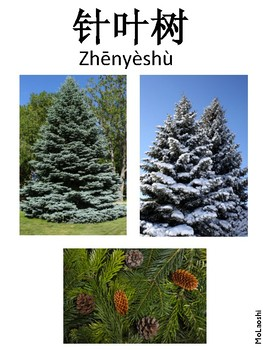 Classification of Living Things Printables (Chinese)