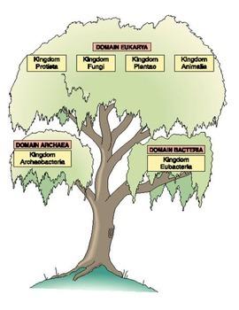 Classificaton into Domains Sort with Criteria