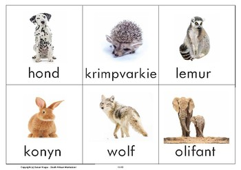 Classified Sorting Cards - Insects, Mammals, Reptiles (Afrikaans)