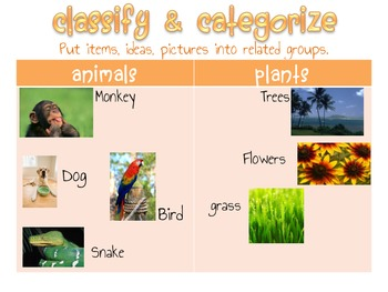 Classify & Categorize Anchor Chart