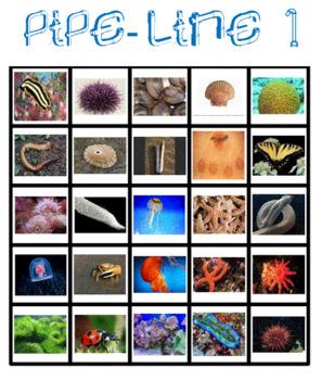 Classify Invertebrates Pipe Line Game