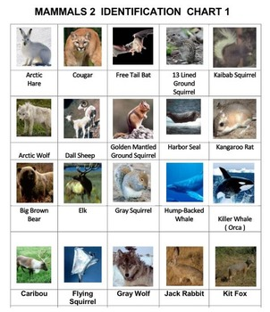 Classify Mammals  Vol. 2