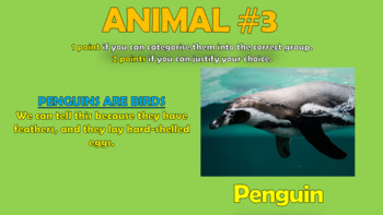 Classifying Animals!