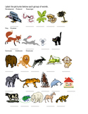 Classifying Animals Picture Sort