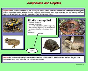 Classifying Animals – A Third Grade PowerPoint Introduction and Go Fish Game
