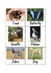 Animal Cards - 58 Labelled Picture Cards!