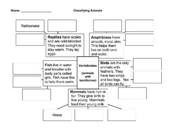 Graphic Organizer: Classifying Animals - Vertebrates