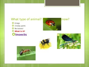 Classifying Animals Powerpoint