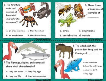 Classifying Animals Science Scoot ' Ems