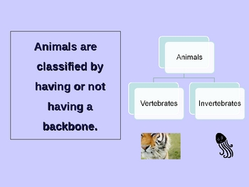 Classifying Animals: Vertebrates & Invertebrates