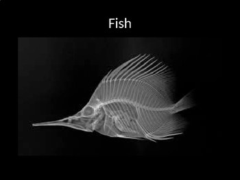 Classifying Animals - Vertebrates and Invertebrates