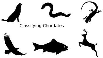 Classifying Chordates
