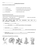 Classifying Flowering and Non-Flowering Plants Assessment