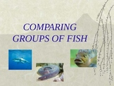 Classifying Groups of Fish