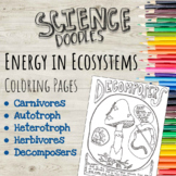 Energy in Ecosystems Coloring Pages