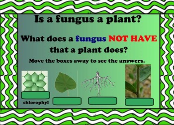 Classifying Living Things Presentation and Activities for Smartboard