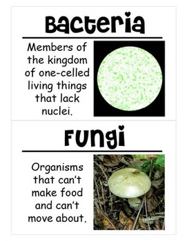 Classifying Living Things Science Vocabulary Cards (Large)
