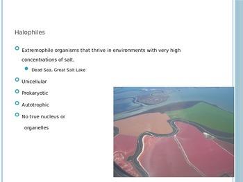 Classifying Marine Organisms Formative Quiz