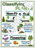 Classifying Plants Anchor Chart