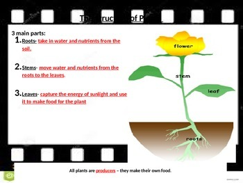 Classifying Plants - POWERPOINT WITH NOTES
