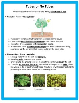 Classifying Plants - STUDY GUIDE