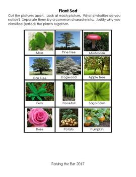 Classifying Plants Sort