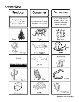 Expert producer consumer decomposer worksheet Awesome