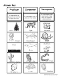 4th Grade: Classifying Producers, Consumers, and Decompose