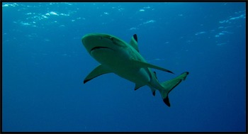 Classifying Sharks  Smartboard
