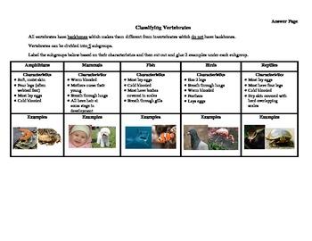 Classifying Vertebrates and Invertebrates