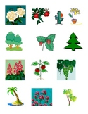 Classifying plants - used with molecular biology lesson
