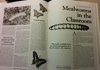 Classroom Creature Culture - Algae to Anoles