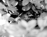 Classroom Lens Stock Photo -  Bird 1