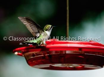 Classroom Lens Stock Photo - Hummingbird